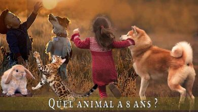 Quel-animal-a-8-ans-00