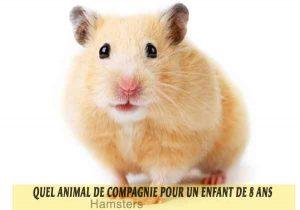 Quel-animal-de-compagnie-pour-un-enfant-de-8-ans-03-Hamsters