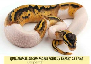 Quel-animal-de-compagnie-pour-un-enfant-de-8-ans-08-Serpents