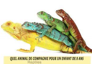 Quel-animal-de-compagnie-pour-un-enfant-de-8-ans-15-Reptiles