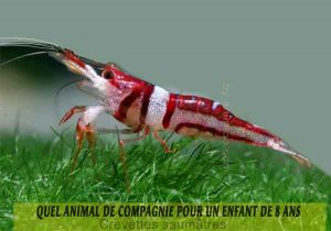 Quel-animal-de-compagnie-pour-un-enfant-de-8-ans-16-Crevettes-saumâtres