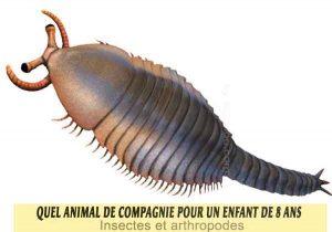 Quel-animal-de-compagnie-pour-un-enfant-de-8-ans-17-Insectes-et-arthropodes