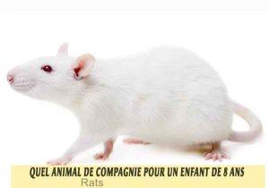 Quel-animal-de-compagnie-pour-un-enfant-de-8-ans-19-Rats