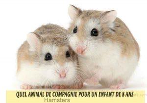 Quel-animal-de-compagnie-pour-un-enfant-de-8-ans-20-Hamsters