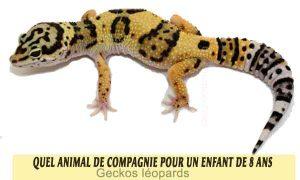 Quel-animal-de-compagnie-pour-un-enfant-de-8-ans-22-Geckos-léopards