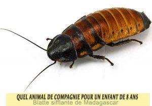 Quel-animal-de-compagnie-pour-un-enfant-de-8-ans-24-Blatte-sifflante-de-Madagascar