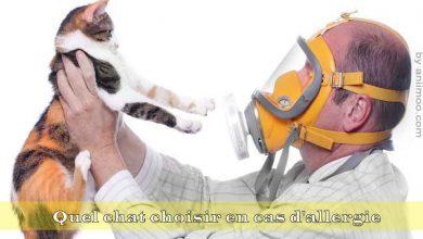 Quel-chat-choisir-en-cas-d'allergie,aniimoo-00