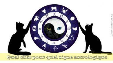 Quel-chat-pour-quel-signe-astrologique-00