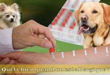 Quel-chien-quand-on-est-allergique-00