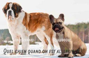 Quel-chien-quand-on-est-allergique01