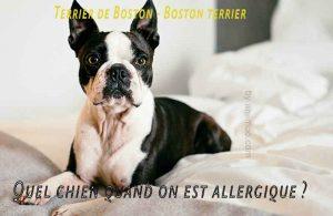 Quel-chien-quand-on-est-allergique05