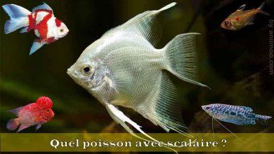 Quel-poisson-avec-scalaire-00