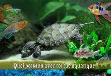 Quel-poisson-avec-tortue-aquqtique-00