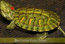 Quel-tortue-d'eau-choisir-00