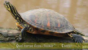 Quel-tortue-d'eau-choisir-03