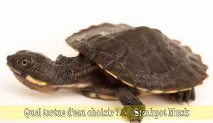 Quel-tortue-d'eau-choisir-05