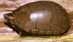 Quel-tortue-d'eau-choisir-06
