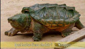 Quel-tortue-d'eau-choisir-07