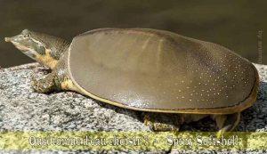 Quel-tortue-d'eau-choisir-08