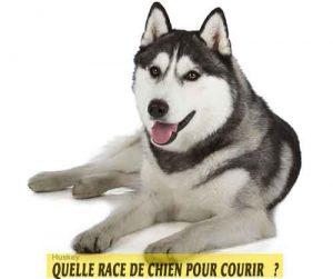Quelle-race-de-chien-pour-courir-04-Huskey