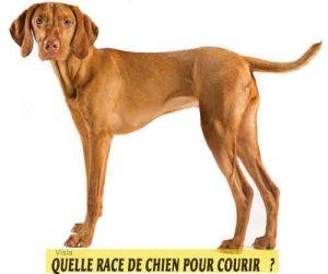 Quelle-race-de-chien-pour-courir-06-Visla