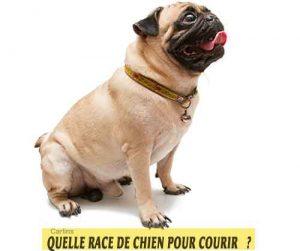 Quelle-race-de-chien-pour-courir-09-Carloins