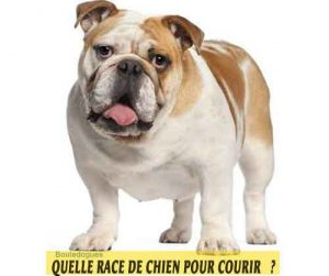 Quelle-race-de-chien-pour-courir-10-Bouledogues