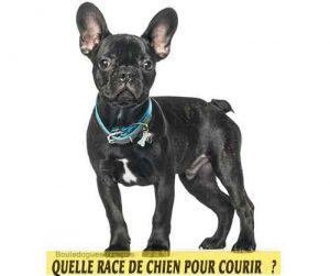 Quelle-race-de-chien-pour-courir-11-Bouledogues-français
