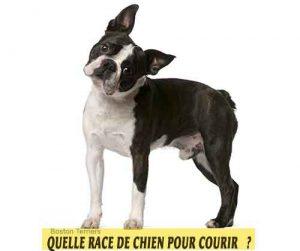 Quelle-race-de-chien-pour-courir-14-Boston-Terriers