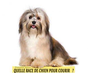 Quelle-race-de-chien-pour-courir-15-Ilhasassa-apsos