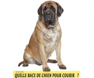 Quelle-race-de-chien-pour-courir-17-Mastiff