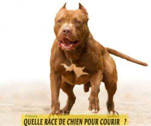 Quelle-race-de-chien-pour-courir-20-Pitbull