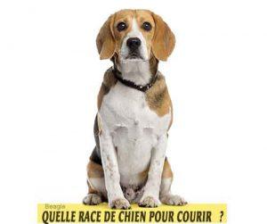 Quelle-race-de-chien-pour-courir-22-Beagle