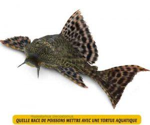 Quelle-race-de-poissons-mettre-avec-une-tortue-aquatique-10-Hypostomus-plecostomus