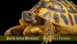 Quelle-tortue-Hermann-01