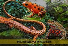 Quels-reptiles-pour-un-Paludarium-00