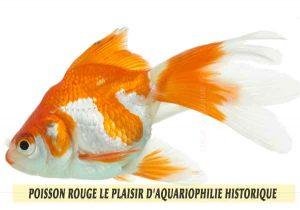 Poisson-rouge-le-plaisir-d'aquariophilie-historique-01
