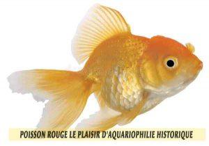 Poisson-rouge-le-plaisir-d'aquariophilie-historique-02