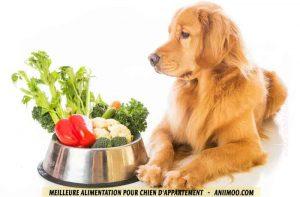 Meilleure-alimentation-pour-chien-d'appartement-02