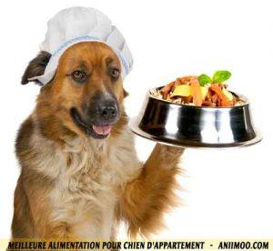 Meilleure-alimentation-pour-chien-d'appartement-03