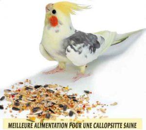 Meilleure-alimentation-pour-une-Callopsitte-saine-13