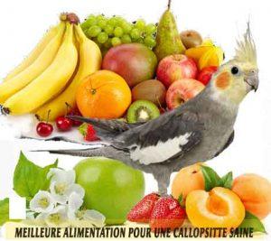 Meilleure-alimentation-pour-une-Callopsitte-saine-14