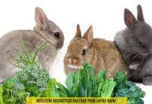 Meilleure-nourriture-pas-cher-pour-lapins-nains-00