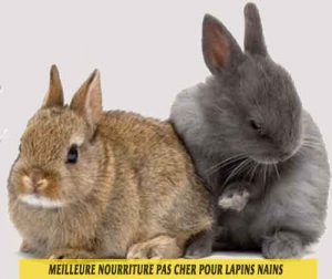 Meilleure-nourriture-pas-cher-pour-lapins-nains-01