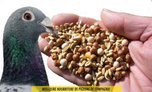 quelle-Meilleure-nourriture-de-pigeons-de-compagnie-05