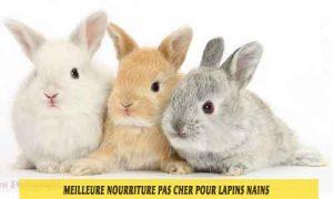 Meilleure-nourriture-pour-lapins-nains-disponible-sur-le-marché-français-15