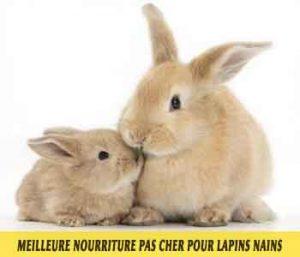 Meilleure-nourriture-pour-lapins-nains-disponible-sur-le-marché-français-16