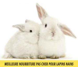 Meilleure-nourriture-pour-lapins-nains-disponible-sur-le-marché-français-17