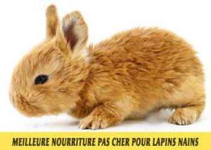 Meilleure-nourriture-pour-lapins-nains-disponible-sur-le-marché-français-18