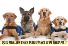 Quel meilleur chien d'Assistance et de Thérapie?
